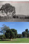 Hovell Tree Albury
