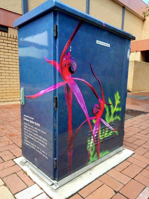Spider Orchid, Swift St Albury