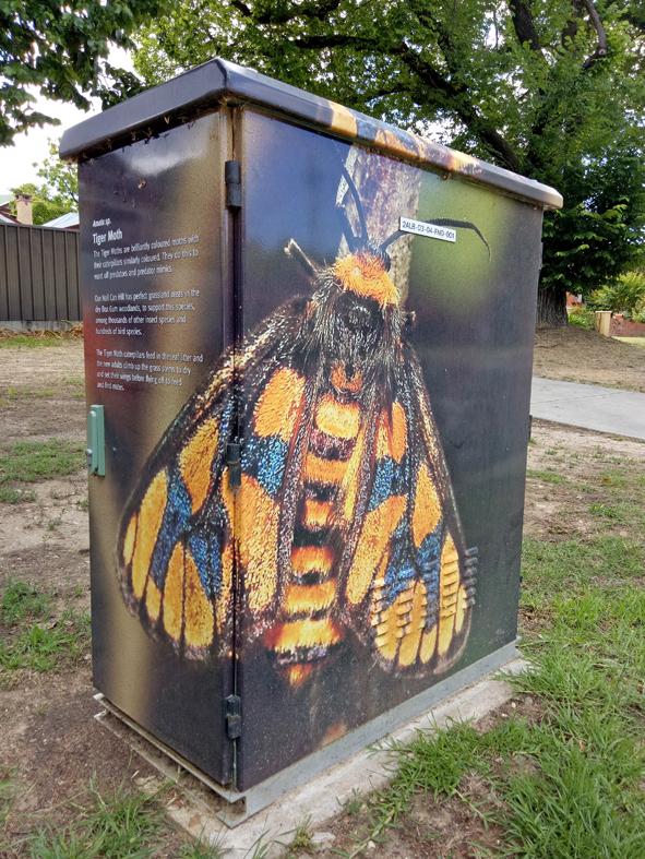 Tiger Moth Thurgoona St